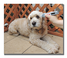 thermopet_measurment_dog_2